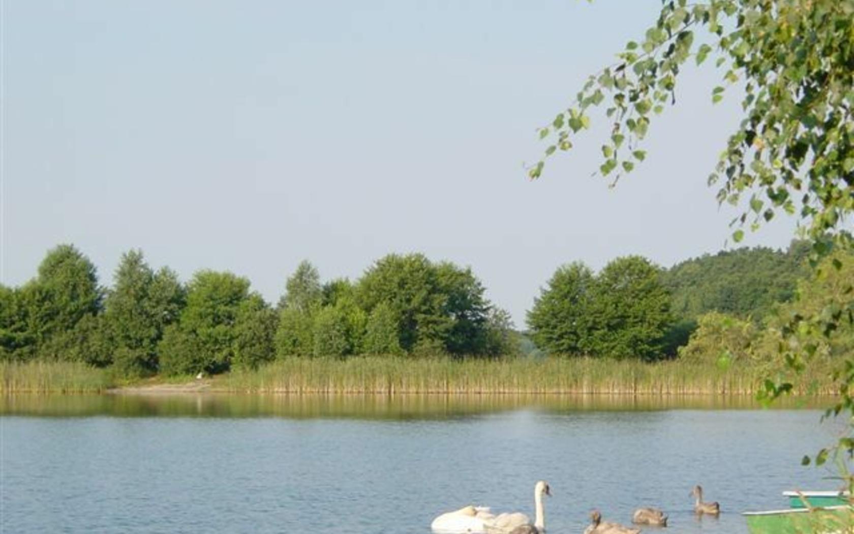 Schwanenzuwachs am Pinnower See, Foto: Doreen Noack